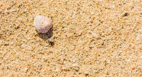 Einzelne Muschel im Sand Lizenzfreies Stockbild