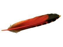 Einzelne orange und schwarze Feder des Aufflackernvogels Lizenzfreie Stockfotografie