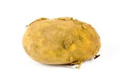 Einzelne organische schmutzige Kartoffel auf Weiß lizenzfreies stockfoto