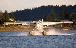 Einzelne Otter-Landung Stockfotos