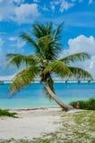 Einzelne Palme sitzt gegen das karibische Meer Lizenzfreie Stockfotografie