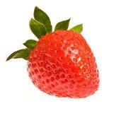 Einzelne reife Erdbeere Stockbild