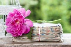Einzelne rosa Pfingstrosenblume auf Stapel Buchstaben Stockbilder