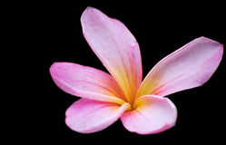 Einzelne rosafarbene Blume stockbilder