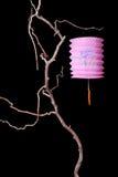 Einzelne rosafarbene Laterne Stockbild