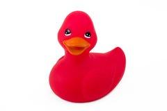 Einzelne rote Ente getrennt auf Weiß Stockfoto