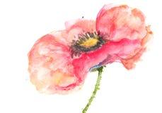 Einzelne rote Mohnblume, Acrylfarbmalerei Stockbilder