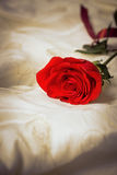 Einzelne rote Rose Lizenzfreies Stockbild