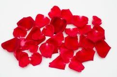 Einzelne Rotrose auf weißem Hintergrund Stockfotografie