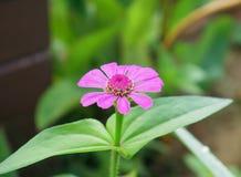 Einzelne schöne Blume Stockbilder