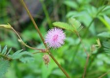 Einzelne schöne Blume Lizenzfreie Stockfotos