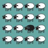Einzelne schwarze Schafe in der Gruppe der weißen Schafe stock abbildung