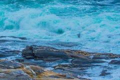 Einzelne Seemöwe über Maine Coast stockfotos