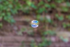 Einzelne Seifenblase vor überwuchertem Gartenzaun lizenzfreies stockbild