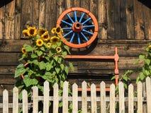 Einzelne Sonnenblumen und Weinlese-Rad auf hölzernem Backgraund stockbild