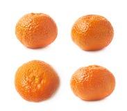 Einzelne Tangerinefrucht stockfotografie