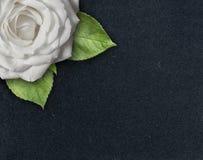 Einzelne weiße Rose mit grünen Blättern in der Ecke des dunklen strukturierten Hintergrundes mit Kopienraum stockfotografie