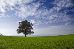Einzelner Baum Lizenzfreie Stockfotos