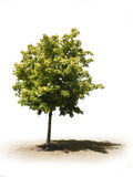 Einzelner Baum Lizenzfreies Stockbild