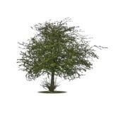 Einzelner Baum Lizenzfreie Stockbilder
