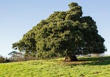 Einzelner Baum Lizenzfreie Stockfotografie