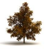 Einzelner Baum vektor abbildung