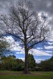 Einzelner Baum Lizenzfreies Stockfoto