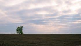 Einzelner Baum auf dem Gebiet Ackerland Lizenzfreie Stockfotografie