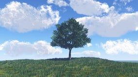 Einzelner Baum auf der Wiese lizenzfreie abbildung