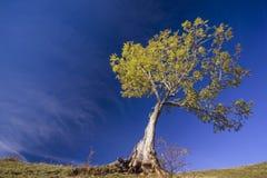 Einzelner Baum auf einem Hügel lizenzfreies stockbild