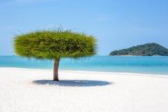 Einzelner Baum auf einem Strand in Malaysia Stockfoto
