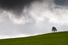 Einzelner Baum auf einer Wiese mit einem dunklen Himmel Lizenzfreies Stockbild