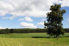 Einzelner Baum auf Feld Stockbild