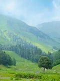 Einzelner Baum auf Gebirgshintergrund Stockfoto