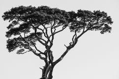 Einzelner Baum auf hohem Berg Stockfotografie