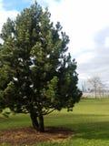 Einzelner Baum auf Rasen mit Hudson River im Hintergrund, Jersey City jenseits lizenzfreie stockfotografie