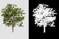 Einzelner Baum auf transparentem Bildhintergrund mit Beschneidungspfad, einzelner Baum mit Beschneidungspfad und Alphakanal auf S vektor abbildung