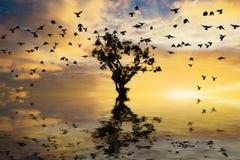 Einzelner Baum auf Wasser mit Sonnenaufgang und Vögeln Stockbilder