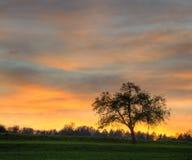 Einzelner Baum auf Wiese mit Sonnenuntergang Stockfoto