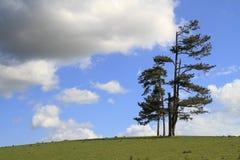 Einzelner Baum, der alleine auf einem Gebiet steht Lizenzfreie Stockfotografie