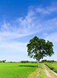 Einzelner Baum, der alleine steht Stockfotos
