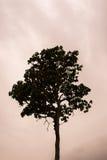 Einzelner Baum, der alleine steht Stockbild