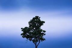 Einzelner Baum, der alleine steht Lizenzfreies Stockfoto