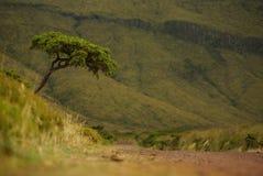 Einzelner Baum in der Flores-Grünlandschaft, Azoren, Portugal stockfotografie