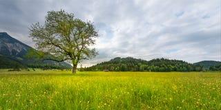 Einzelner Baum in der ländlichen Wiese mit Blumen Stockfoto