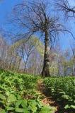 Einzelner Baum in der merkwürdigen Perspektive Lizenzfreie Stockfotografie