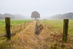 Einzelner Baum, der nahe einem Abzugsgraben steht Lizenzfreie Stockfotografie