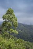 Einzelner Baum an der Seite von Hügeln lizenzfreies stockbild