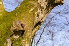 Einzelner Baum in der Wintersonne Stockfotos