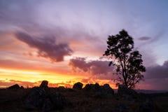 Einzelner Baum in einer Wüste mit einem schönen bewölkten Himmel im Hintergrund bei Sonnenuntergang lizenzfreies stockbild